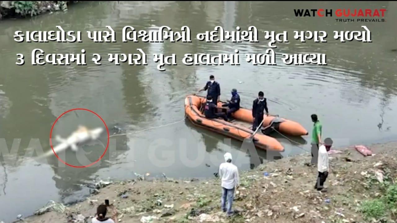 Gujarat, Vadodara 2 dead crocodile found from vishwamitri river in last 3 days